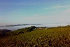 Winnice Marco Ricasoli - mgła 2