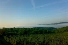 Winnice Marco Ricasoli - mgłą 3