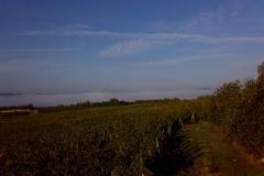 Winnice Marco Ricasoli - mgła