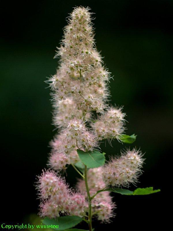 kwiat04